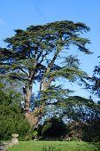 High Tree And Blue Sky