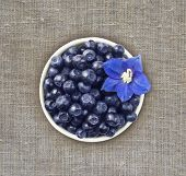 Top View. Bilberres And Blue Flower. Ripe Blueberries With Copy Space For Text. Ripe And Tasty Blueb poster