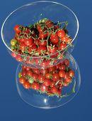 Fresco escolheu tomates cereja do meu jardim em um espelho com um céu azul em uma tigela de vidro
