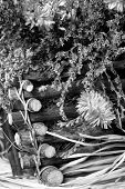 Dried Fall Flowers Basket Close Up 3 Bw F