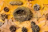 Nest Empty On Autumnal Background With Fallen Maple Leaves And Fir Cones. Autumn In Air. Fall Season poster