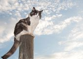 Diluted calico cat sitting on a fence post against cloudy skies