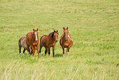 Pequeña manada de caballos ranchos de pradera verde pasto en verano