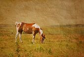 Antique textured image of a paint horse grazing in pasture against wide open prairie background in s