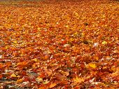 Ground covered with recently fallen leaves
