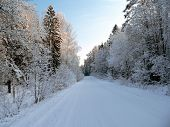 Winter road through forest