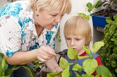 The grandson and grandmother Studying a plant