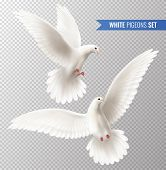White Dove Transparent Set With Peace Symbols Realistic Isolated Vector Illustration poster