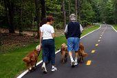 Family Walking Dogs 002
