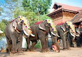 COCHIN, INDIA - FEBRUARY 3 : Gold caparisoned elephants for parade at the annual festival in Siva Te