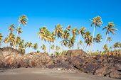 Vista panorâmica da bela praia tropical com árvore de Palmas contra o céu azul em pouco Vagator, Goa,