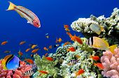 stock photo of biodiversity  - Tropical fish and Coral Reef - JPG