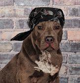 Tough Pitty