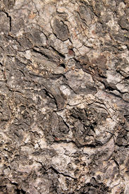 pic of bosveld  - Picture Rough Grooved Bushveld Tree Trunk Background - JPG