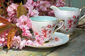 Beautiful Japanese Cherry Tree And A Cup Of Tea