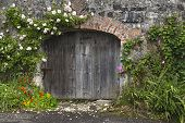 Charming Rose Covered Wall And Stable Doors