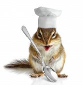 pic of chipmunks  - Funny chef chipmunk with spoon on white background - JPG