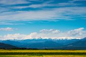 foto of rap  - Raps field with Pyrenees in distance - JPG