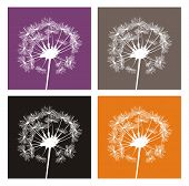 Vector white dandelion silhouette on different, colorful backgrounds. Indian summer or autumn icons