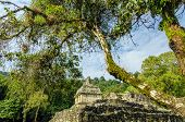 Mayan Temple And Trees