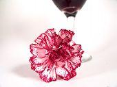 Carnation Wine Glass