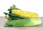 Fresh Sweet Corns On Table