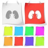 Kidneys. Raster note papers.