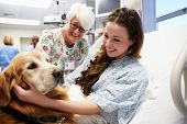 picture of 70-year-old  - Therapy Dog Visiting Young Female Patient In Hospital - JPG
