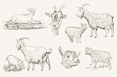 stock photo of husbandry  - vector sketch of a goat made by hand - JPG