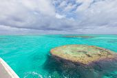 Purple Corals Underwater