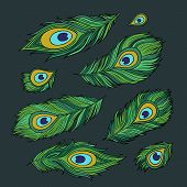 Peacock feathers vector abstract set
