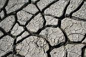shrinkage cracks