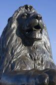 Trafalgar Lion Front On