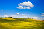 Tuscany, Farmland And Cypress Trees, Green Fields. Pienza, Italy.