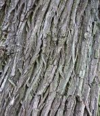 Tree Bark Texture Closeup
