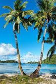 Close up Palm Trees at Beautiful Anse l' Islette Beach in Mahe Island, Seychelles