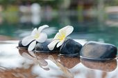 picture of plumeria flower  - Plumeria Flowers on Row of Stones at Edge of Pool in Peaceful Spa Setting - JPG