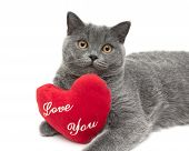 Gray Scottish Cat With A Red Cushion. White Background.