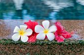 Still Life of Hibiscus and Plumeria Flowers at Edge of Pool in Peaceful Setting