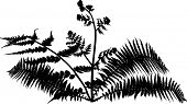 illustration with fern bush silhouettes isolated on white