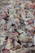 Fresh Squid On A Tray In The Market