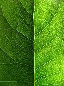 leaf close up