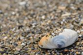 Shell on sea shore