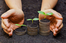 picture of sustainable development  - hands holding trees growing on coins  - JPG