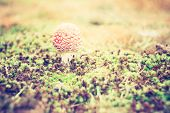 pic of toadstools  - Beautiful red autumnal toadstool  - JPG