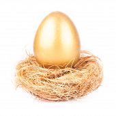 picture of priceless  - One golden eggs in the nest isolated on white  - JPG