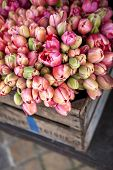 stock photo of wooden crate  - Bunch of tulips in a wooden crate  - JPG