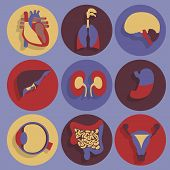 image of organ  - Set of icons for medical theme - JPG