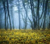 stock photo of mystery  - Mysterious dark forest in fog with green leaves and yellow flowers - JPG