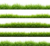 pic of farm land  - fresh spring green grass isolated on white background - JPG